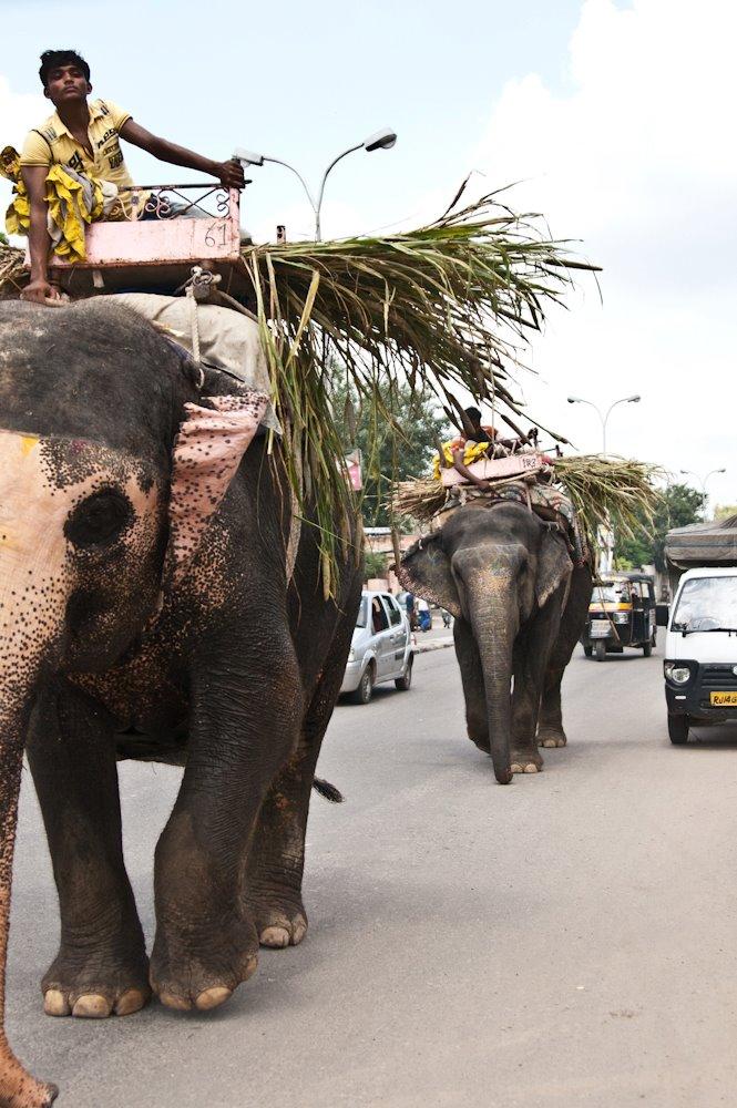 Elephant India